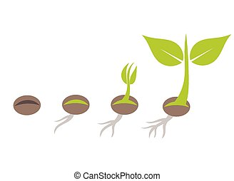 Plant germination - Plant seed germination stages. Vector ...