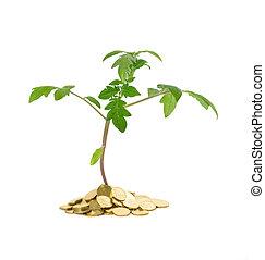 plant, groei, -, handel concept