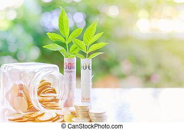 Plant growing from banknote, Thai Baht currency money with...