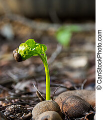 Plant growing from soil.The concept about having a new life.