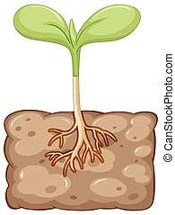 Plant growing from underground