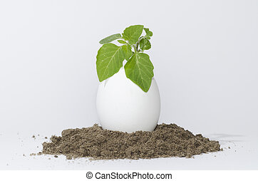 Plant growing in a egg