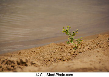 Plant growing in the sand on the river bank.