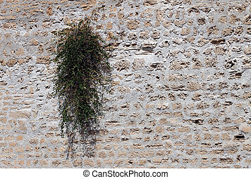 Plant growing on old wall