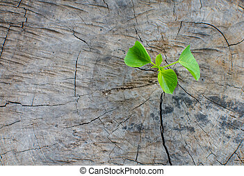 Plant growing on tree stump
