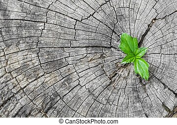 plant growing out of a tree stump - Green seedling growing...