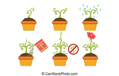 Plant Growing Stages Set, Growth of Plant in Pot from Sprout to Flower Vector Illustration