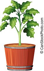 Plant Growing the Pot