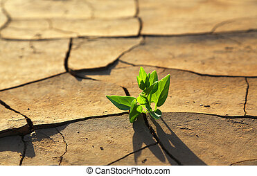 Plant growing through dry cracked soil - Green plant growing...