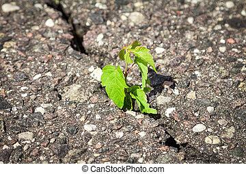 Plant growing trough cracked asphalt