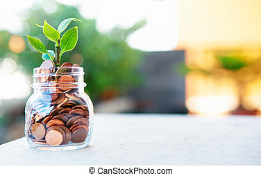 Plant grows up in money, rich or business
