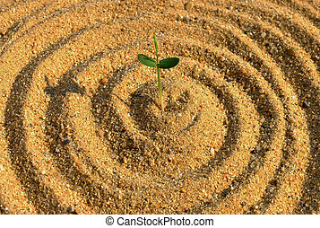 plant growth on the sand