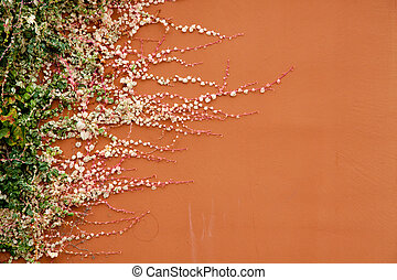 Plant Growth - A plant grows horizontal on a terracotta...