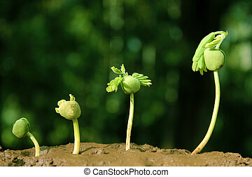 Plant growth-Stages development and Progression of seedling growth