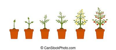 Plant growth stages in in ceramic pot. Tree with green leaf ...