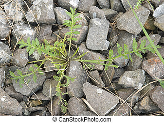 plant growth from pebbles background