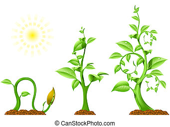 Three phases of plant growth, vector image