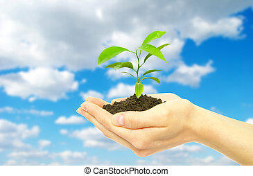 plant - Hands holding sapling in soil  on sky