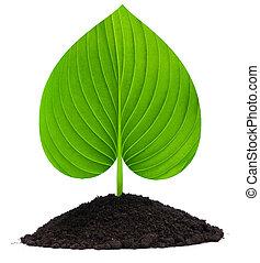 plant-heart