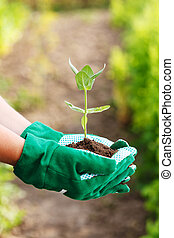 plant, holdingshand
