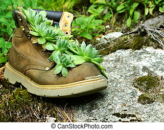 Plant in a Boot