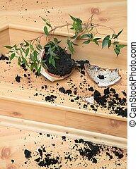 Plant in a broken flower pot