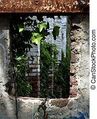 plant in a broken window