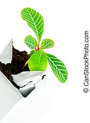 plant in a case