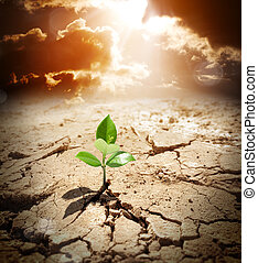 plant in arid land, climate warming