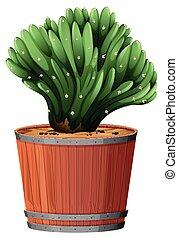 Plant in barrel pot