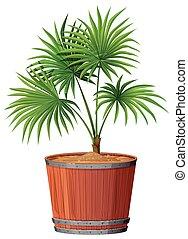Plant in barrell pot