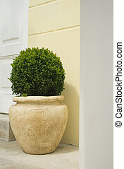Plant in big ceramic pot on a background of wall