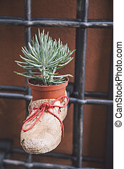 plant in boot