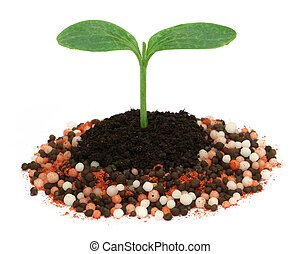 Plant in chemical fertilizer
