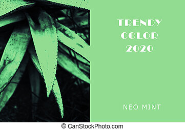 Plant in color Neo Mint. Juicy tones in a new mint color. Echeveria Juicy green plants. Abstract light green background with vibrant colors. Copy space. mockup for design