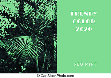 Plant in color Neo Mint. Juicy tones in a new mint color. Palm branches. Lush green plants. Abstract light green background with vibrant colors. Copy space. mockup for design