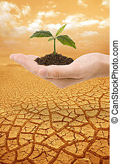 Plant in hand droughty earth - Sprig plant in a hand over...