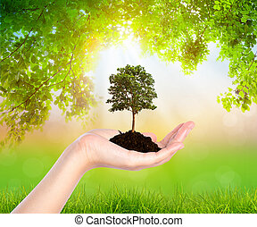 Plant in hand over Green leaf  background