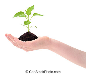 Plant in hand.