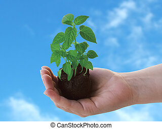 Plant in hand - Holding a new plant