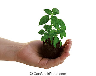plant, in, hand