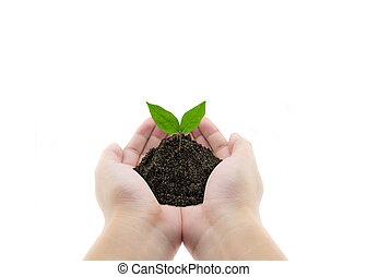 plant in hands - grass background, environment concept