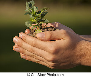 plant in hands grass background