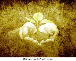 plant in hands
