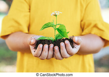 Plant in hands of little child. Growth and agriculture concept.