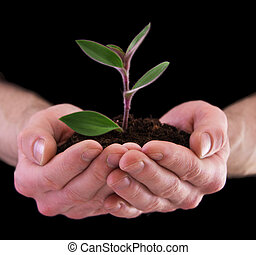 plant in hands - on black background