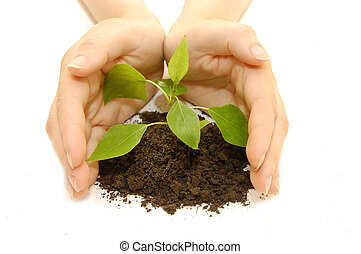 plant in hands on white