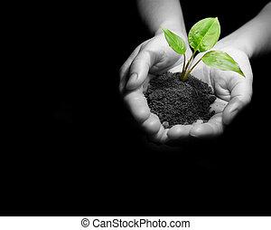 plant in hands - Plant between hands on black