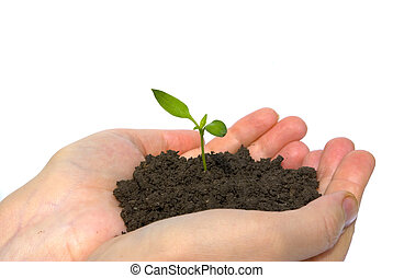 plant in hands - plant in the hand on dark white background