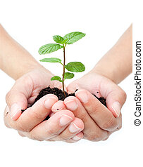 Small seedling growing from hands